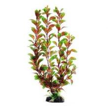 Людвигия красная BARBUS Plant 006 10 см