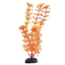 Кабомба оранжевая BARBUS Plant 021 10 см