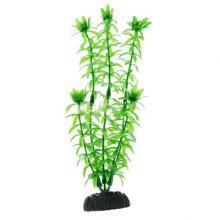 Элодея зеленая BARBUS Plant 004 30 см