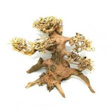 Дерево бонсай М500