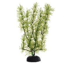 Яванский мох зеленый BARBUS Plant 024 10 см